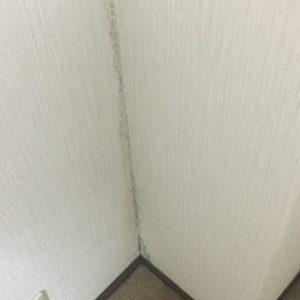 黒カビが発生した壁紙